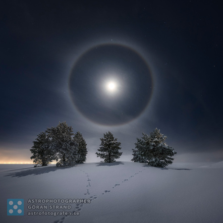 Lunar Halo over trees